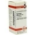 ASPARAGUS OFFICINALIS D 6 Globuli