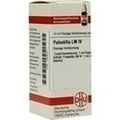LM PULSATILLA IV Dilution