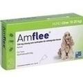 AMFLEE 134 mg Lösung z.Auftropfen f.mittelgr.Hunde