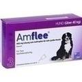 AMFLEE 402 mg Lösung z.Auftropfen f.sehr gr.Hunde