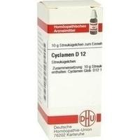 CYCLAMEN D12