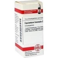 EQUISETUM HIEMALE D 4