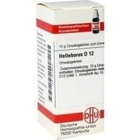 HELLEBORUS D12