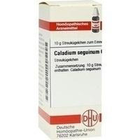 CALADIUM seguinum C 6 Globuli