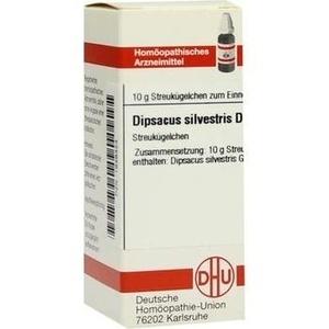 DIPSACUS SILVESTRIS D30