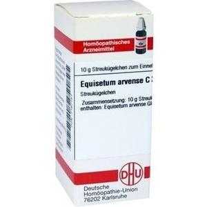 EQUISETUM ARV C30
