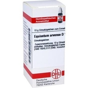 EQUISETUM ARV D12