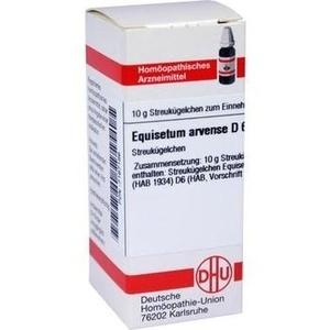EQUISETUM ARV D 6