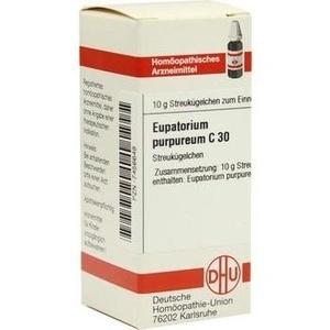 EUPATORIUM PURPUR C30